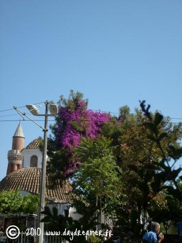 Antalya Niarbre et mosquée.jpg