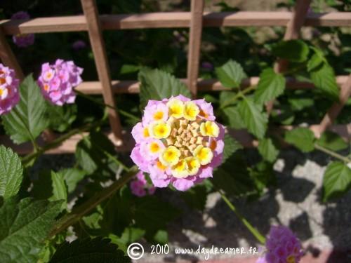 Une fleur.jpg